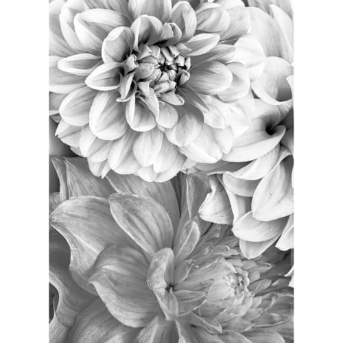 Image of   Plakat - Secret Garden - Dahlia
