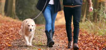 guide til valg af hundesnor0