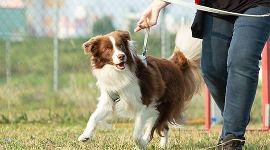 guide til valg af snor til hund